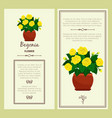 greeting card with begonia plant vector image vector image