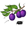 printplum branch drawing hand drawn vector image
