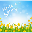 hello spring poster with narcissus vector image vector image