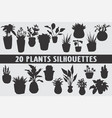 20 house plants design shapes vector image
