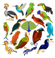 big set of exotic birds vector image vector image