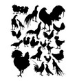 chicken silhouette vector image