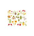 collection forest design elements botanic vector image