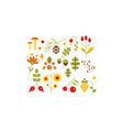 collection of forest design elements botanic vector image vector image