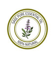 sage essential oil label aromatic plant vector image vector image