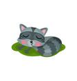 adorable raccoon sleeping on green grass wild vector image vector image
