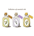 Health and Nature Collection Argan tree vector image