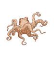 hand drawn designed octopus beige sea element vector image vector image