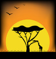 sunset in africa image vector image
