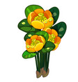 blooming yellow nuphar lutea isolated vector image vector image