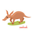 aardvark in cartoon style vector image
