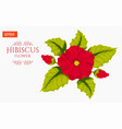 card with hibiscus flower isolated on white vector image vector image
