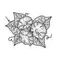 morning glory ipomoea flower sketch vector image vector image