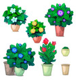 set of decorative plants in pots and red tulips vector image
