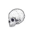 skull t-shirt print vector image vector image