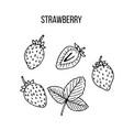 berry hand drawn collection strawberry vector image vector image