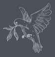 dove or pigeon with olive branch flying isolated vector image vector image