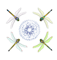 Dragonfly with flower vector image vector image
