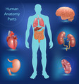 set of human anatomy parts vector image