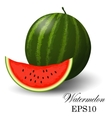 Watermelon on a white background vector image