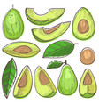 avocado green organic food and healthy vector image