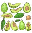 avocado green organic food and healthy vector image vector image