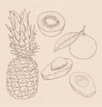 exotic fruits hand drawn sketch on beige vector image vector image