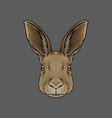 head of hare portrait of wild animal hand drawn vector image