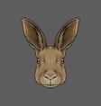 head of hare portrait of wild animal hand drawn vector image vector image