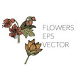 nice flower picture vector image