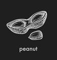 ripe tasty peanut in half of shell monochrome vector image
