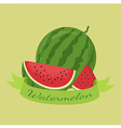 Watermelon Fruit Banner Green vector image vector image