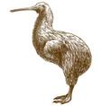 engraving drawing of kiwi bird vector image vector image