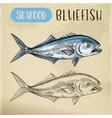 seafood sketch bluefish sign vector image vector image