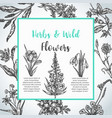 background with hand drawn herbs and wild flowers vector image vector image