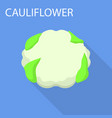 cauliflower icon flat style vector image vector image