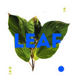 designer element of natural leave herb vector image