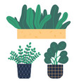 plants growing in pots or planters set green vector image vector image