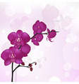 Purple Orchid vector image
