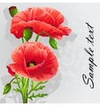 romantic background with poppies vector image vector image