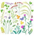 wild herbs wildflowers cereals and insects set vector image vector image