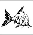 carp fish isolated vector image vector image