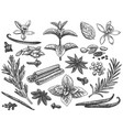 engraved spices cardamom vanilla flower and pod vector image