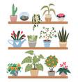 home plants in pots on shelves houseplants vector image vector image