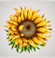 realistic beautiful sunflower yellow flower vector image vector image