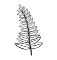 contour of a branch isolated vector image vector image