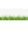 realistic grass transparent border vector image