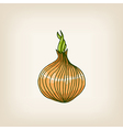 shiny hand drawn onion vector image