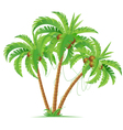 Three coconut palms vector image vector image