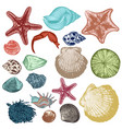 collection antique hand drawn shells vector image